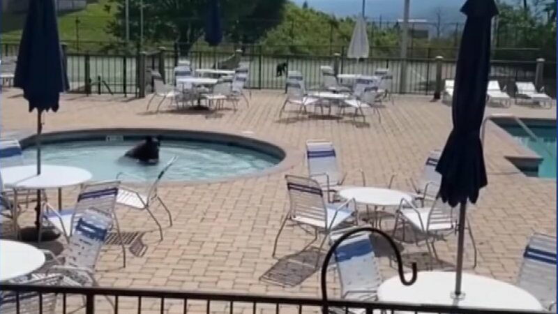 Seven bears crash high school pool party in Tennessee